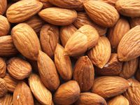 almond for oil production