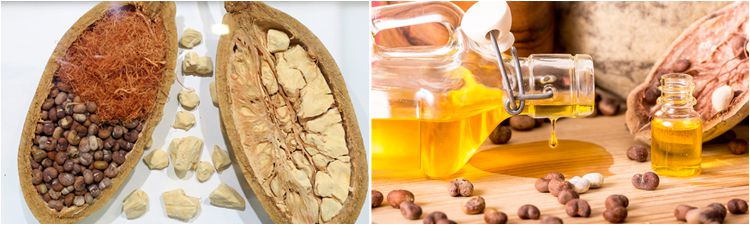 baobab oil uses and benefits
