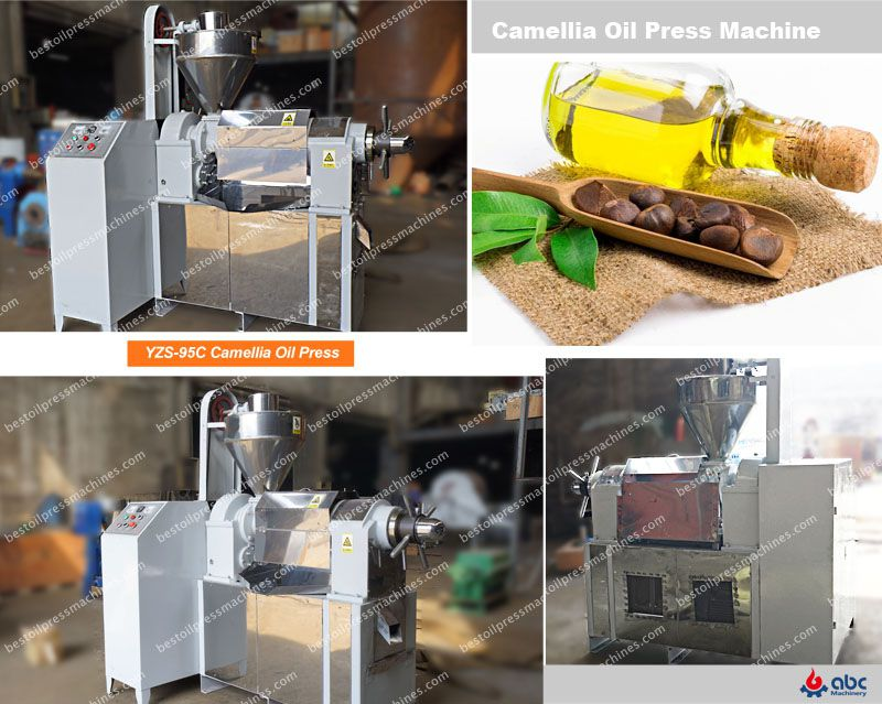 best camellia oil press machine at factory price