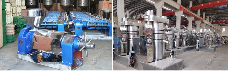 cold press oil machine at factory price
