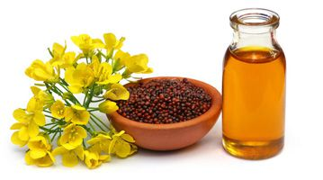 mustard oil used as cooking oil
