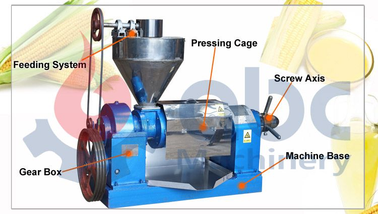 corn germ oil press machine at factory price