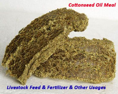 cottonseed oil meal from integrated oil extraction machine