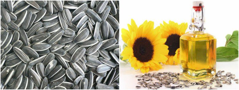 edible sunflower seed oil