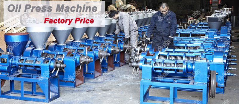factory supply moringa oil machine