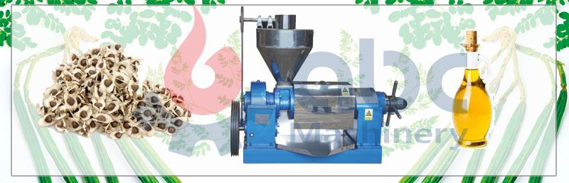 moringa oil press machine at factory price