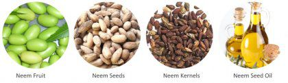 How the Neem Seed Oil Press Machine Extract Oil Automatically?