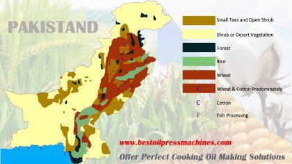 Edible Oil Production Market Research in Pakistan