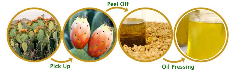 prickly pear seed oil extraction process by oil press machine
