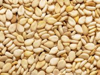 sesame seeds for sesame oil extraction
