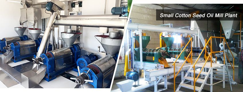 establish cotton seed oil mill plant at low cost